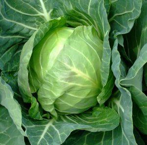 bcs-cabbage-early-copenhagen-market